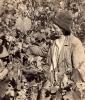 Рачкин Д.С. на виноградной плантации, 1954